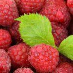 calories in raspberries