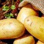 calories in potatoes