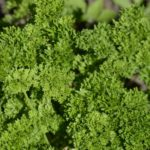 calories in parsley