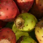 calories in prickly pear