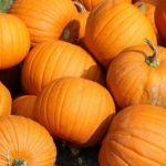 calories in pumpkin