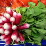 calories in radishes
