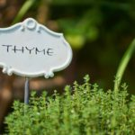 calories in thyme